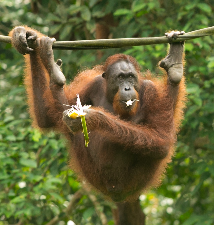 Borneo-3707