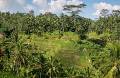 Bali 3-2014-0348