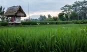 Bali 3-2014-9461