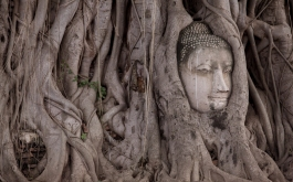 ayutthaya.summer.2016-12