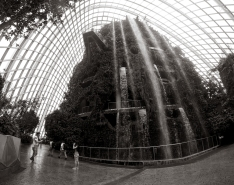 Garden by the Bay #6.