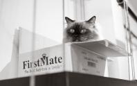 Cat Cafe #5