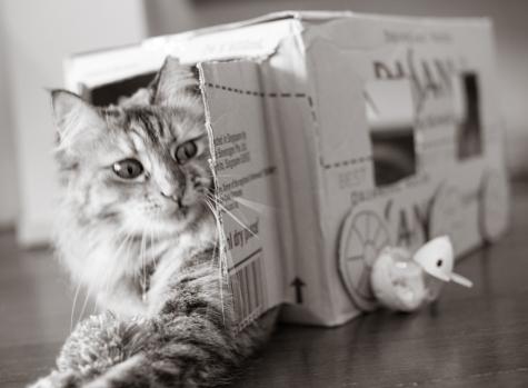 Cat Cafe #2