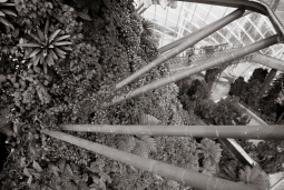 Garden by the Bay #3