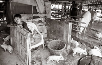 Pig Farm #2
