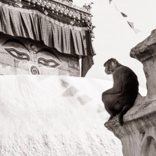 cropped-monkey.temple.1-1
