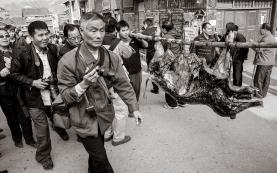 china.ny.14.guilin.pig